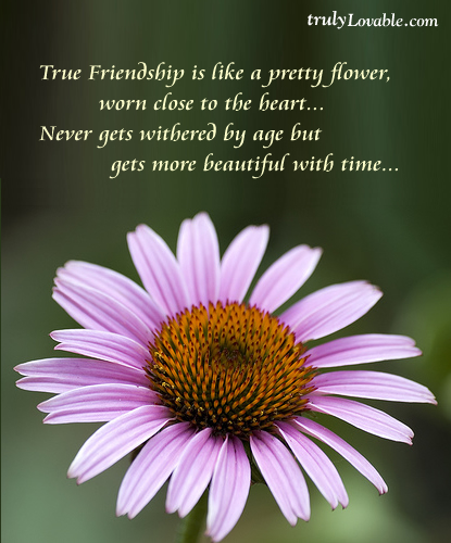 485-true-friendship-is-like